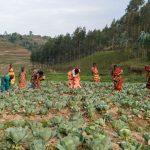 foxglove-project-Grassroots-Rwanda